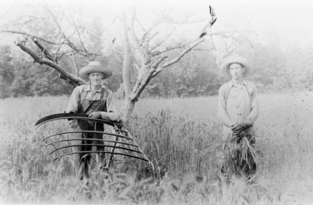 Harvesting Wheat with a Cradle, Southeast Randolph County, circa 1900