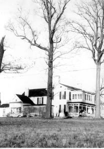 Coffin's House, with part of the oak grove, circa 1940.